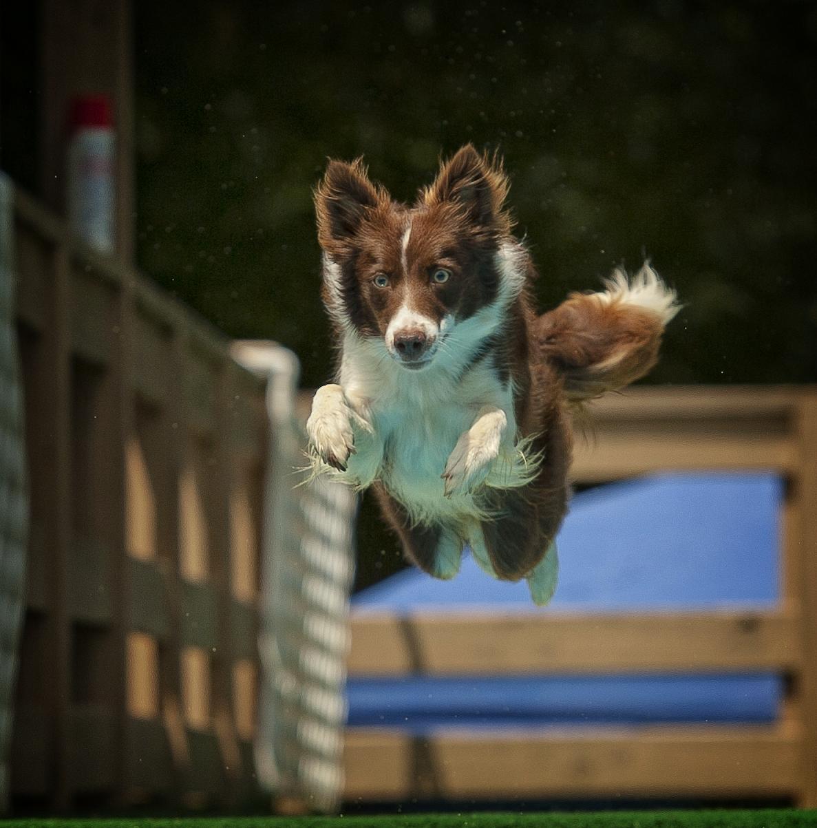 fire-dd-jump