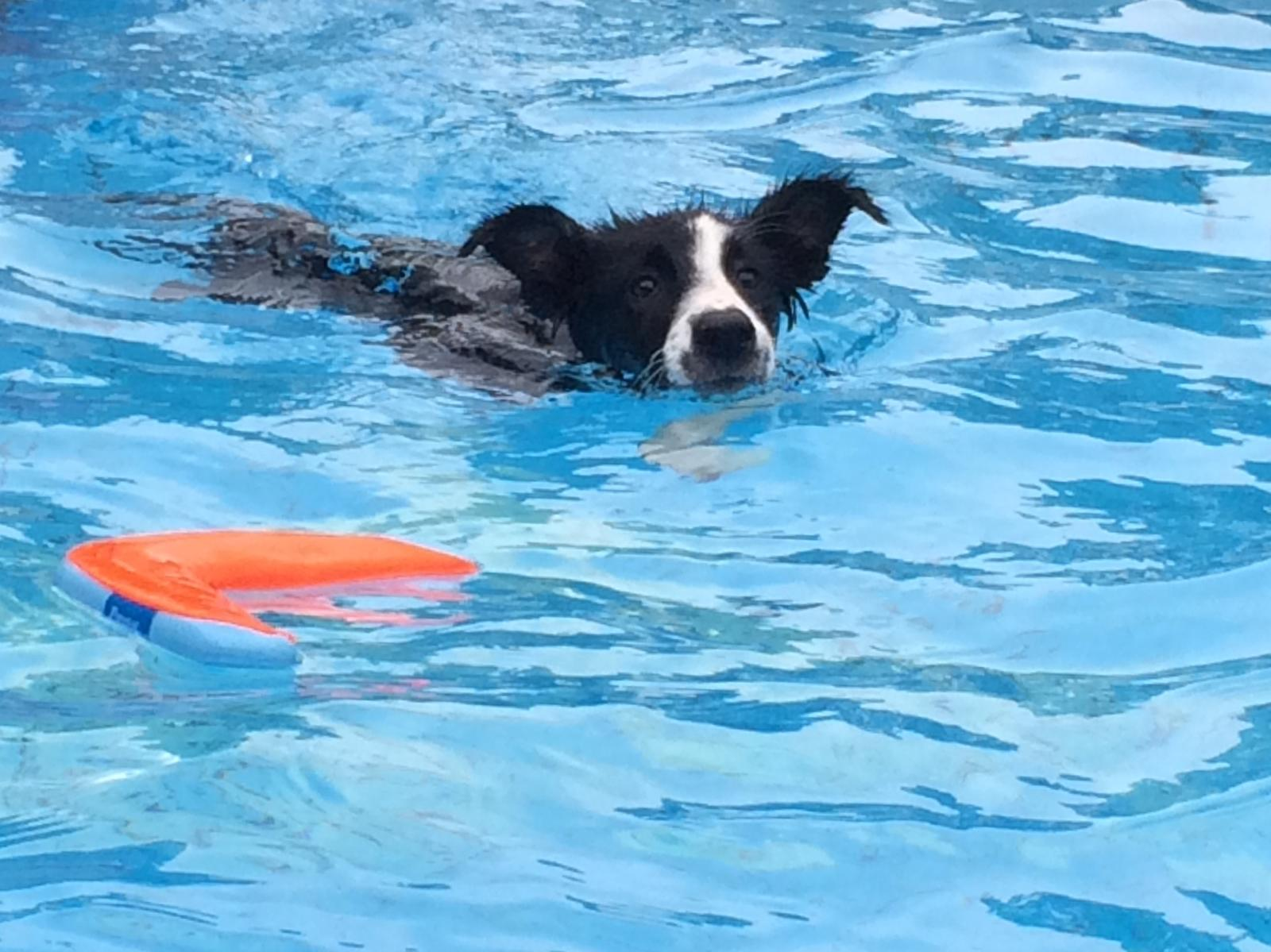 katniss-swim-6-3-15