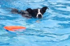 katniss-swim-6-3-15 (1)