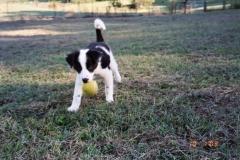 star-puppy-w-ball