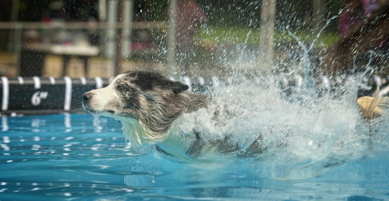 Trust Dock Diving Big Splash